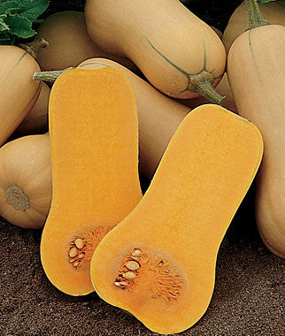 Waltham Butternut - Bulk Vegetable Seeds