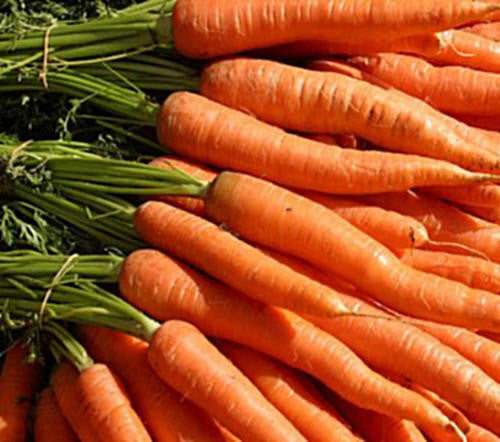 Chantenay Karoo Carrot - Bulk Vegetable Seeds - 100 grams