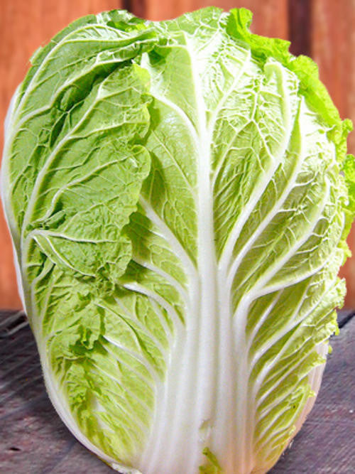 Chichilli Chinese Cabbage - Bulk Vegetable Seeds - 200 grams