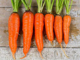 Kuroda Carrot - Bulk Vegetable Seeds - 100 grams