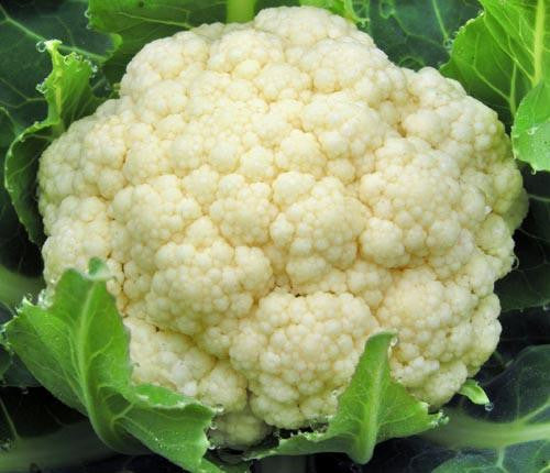 Snowball Cauliflower - Bulk Vegetable Seeds - 100 grams