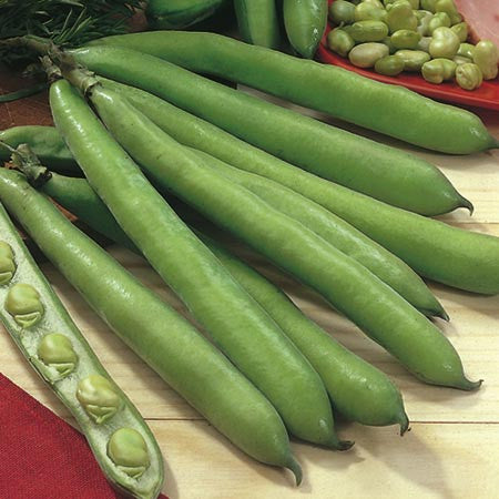 Aquadulce Broad Beans - Bulk Vegetable Seeds