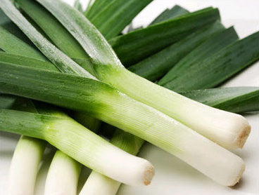 Carentan Leek - Bulk Vegetable Seeds - 50 grams