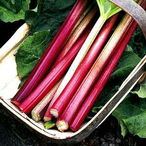 Victoria Rhubarb - Bulk Vegetable / Fruit Seeds - 5 grams