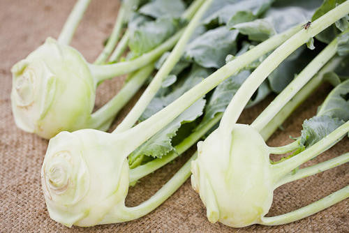 White Vienna Kohlrabi - Bulk Vegetable Seeds - 50 grams