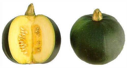 Rolet Gem Squash - Bulk Vegetable Seeds