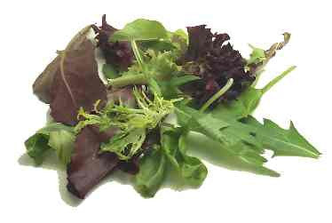 Mesclun Salad Lettuce - ORGANIC - Bulk Vegetable Seeds - 5 grams
