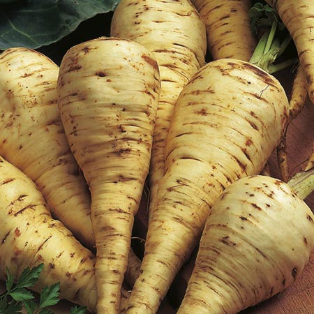 White Gem Parsnip - Bulk Vegetable Seeds - 100 grams