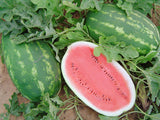 All Sweet Watermelon - Bulk Vegetable Seeds - 50 grams