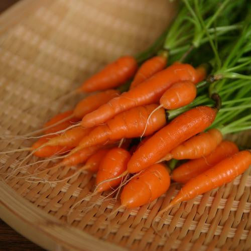 Sweetheart Baby Carrot - Bulk Vegetable Seeds - 50 grams