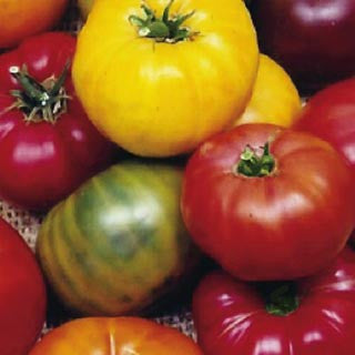 Rainbow Blend Tomato - Bulk Vegetable Seeds - 200 seeds
