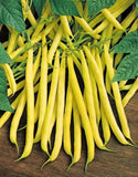 Golden Wax Beans - ORGANIC - Heirloom Vegetable - 10 Seeds
