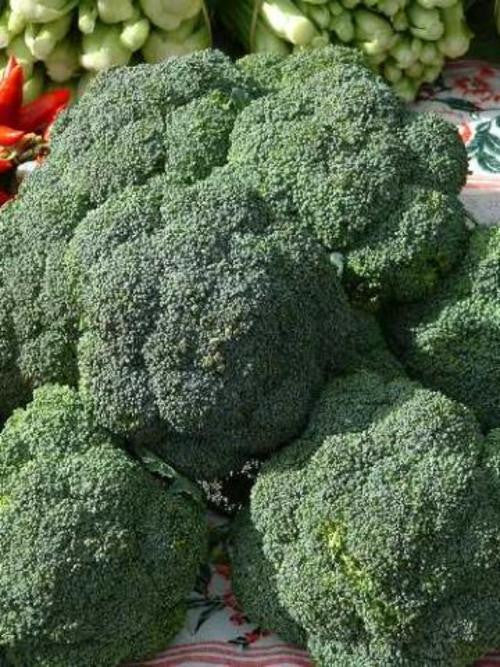 De Cicco Broccoli - ORGANIC - Heirloom Vegetable - 100 Seeds