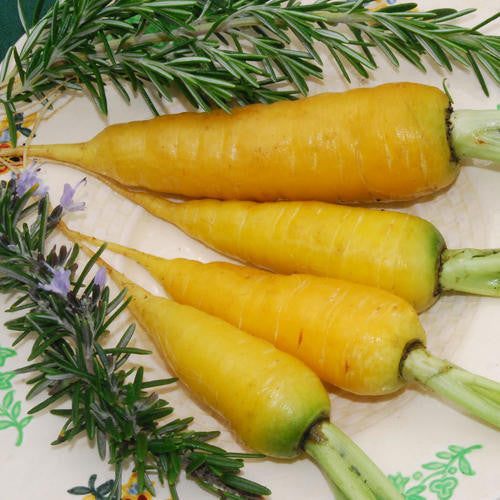 Solar Yellow Carrot - ORGANIC - Heirloom Vegetable - 50 Seeds