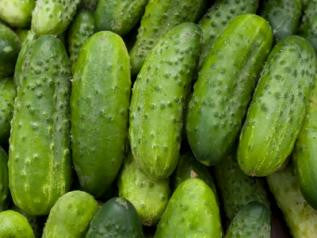 Home Made Pickles Pickling Cucumber - ORGANIC - Heirloom Vegetable - 10 Seeds