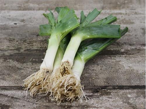 Giant Musselburg Leek - ORGANIC - Heirloom Vegetable - 50 Seeds