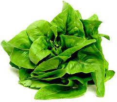Amish Deer Tongue Lettuce - ORGANIC - Heirloom Vegetable - 100 Seeds