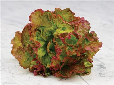 Flame Lettuce - ORGANIC - Heirloom Vegetable - 100 Seeds