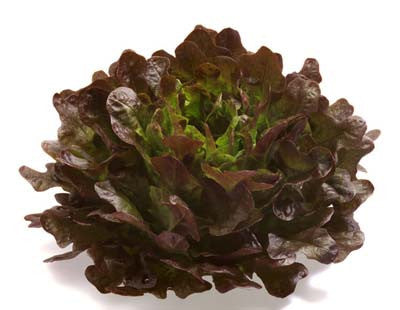 Red Oakleaf Lettuce - ORGANIC - Heirloom Vegetable - 100 Seeds