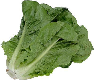 Parris Island Cos Lettuce - ORGANIC - Heirloom Vegetable - 500 Seeds