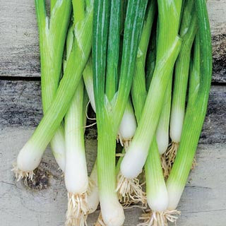 Evergreen White Bunching Spring Onion - ORGANIC - Heirloom Vegetable - 50 Seeds