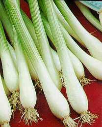 White Tokyo Spring Onion - ORGANIC - Heirloom Vegetable - 50 Seeds