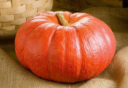Cinderella Pumpkin - ORGANIC - Heirloom Vegetable - 5 Seeds