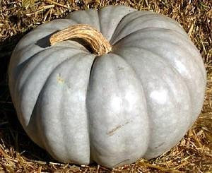 Jarrahdale Pumpkin - ORGANIC - Heirloom Vegetable - 5 Seeds