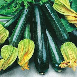 Black Beauty Zucchini - ORGANIC - Heirloom Vegetable - 10 Seeds