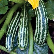 Cocozelle Squash / Zucchini - ORGANIC - Heirloom Vegetable - 10 Seeds