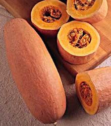 Pink Banana Squash - ORGANIC - Heirloom Vegetable - 5 Seeds