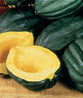 Table Queen Acorn Squash - ORGANIC - Heirloom Vegetable - 10 Seeds