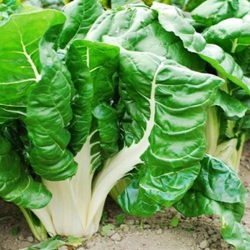Fordhook Swiss Chard - ORGANIC - Heirloom Vegetable - 50 Seeds