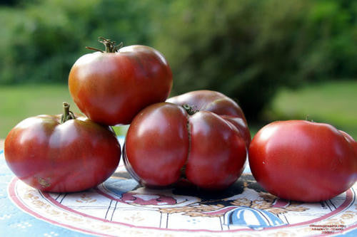 Cherokee Purple Tomato - ORGANIC - Heirloom Vegetable - 10 Seeds