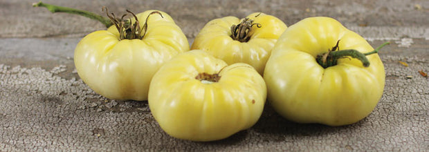 White Wonder Beefsteak Tomato - ORGANIC - Heirloom Vegetable - 10 Seeds