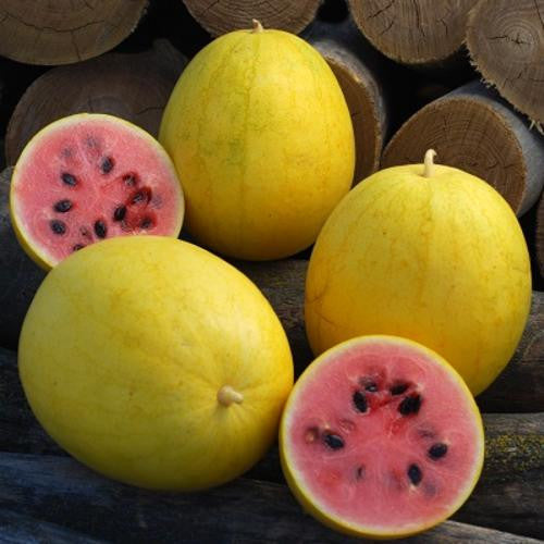 Golden Midget Watermelon - ORGANIC - Heirloom Vegetable - 5 Seeds