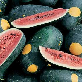 Red Moon & Stars Watermelon - ORGANIC - Heirloom Vegetable - 5 Seeds
