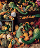 Large Gourds - Ornamental Vegetable - Ornamental Vegetable - 5 Seeds
