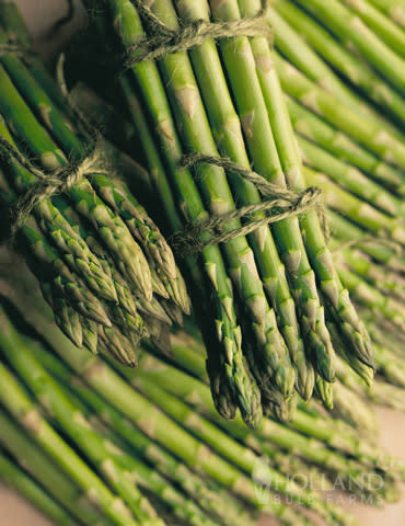 Mary Washington Asparagus - Asparagus officinalis - Organic Heirloom Vegetable - 5 seeds