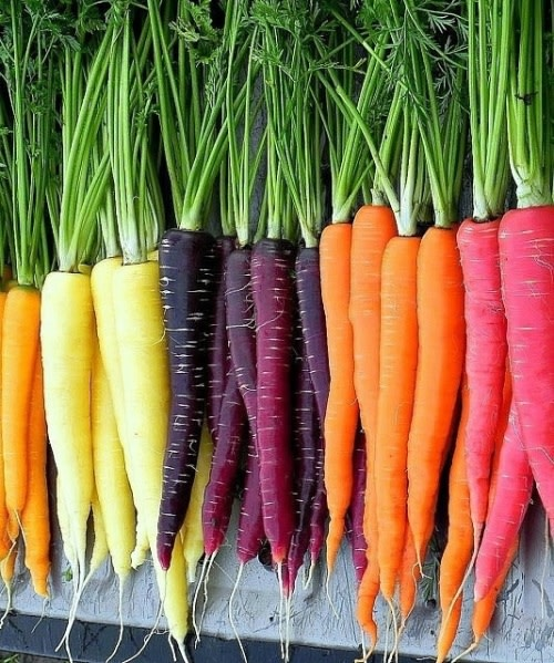 Rainbow Carrot Mix - Daucus carrota - Organic Heirloom Vegetable - 100 seeds