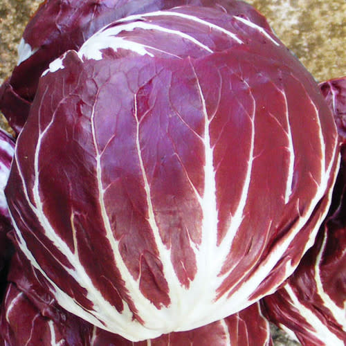 Palla Red Chicory - Cichorium intybus - Organic Heirloom Vegetable - 100 seeds