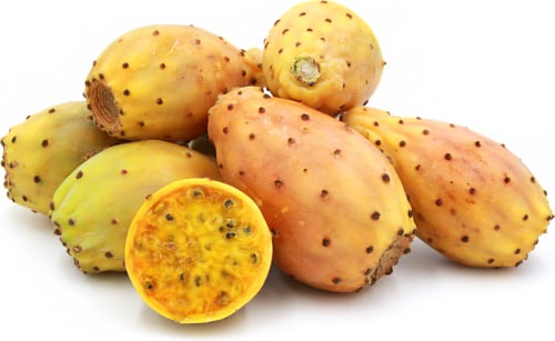 Prickly Pear - Opuntia ssp - Organic Heirloom Fruit - 5 seeds