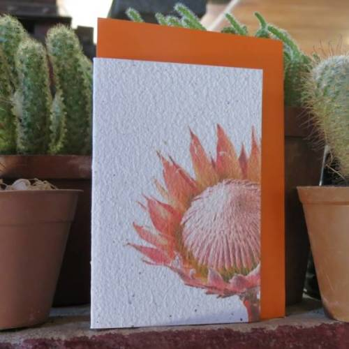Growing Paper - Greeting Card - Protea
