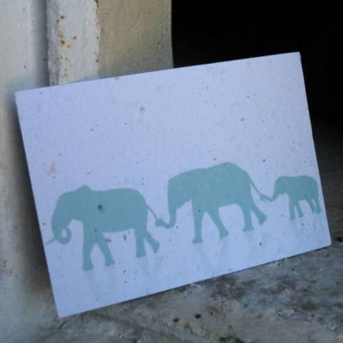 Growing Paper - Post Card - Elephant Herd