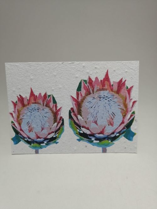 Growing Paper - Post Card - Proteas