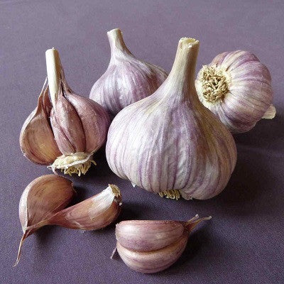Chesnok Red Garlic - Shveliski Garlic - Heirloom Garlic