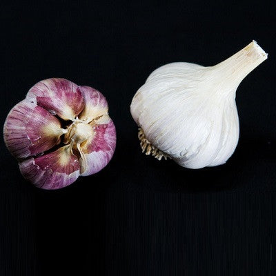 Leningrad Garlic - Heirloom Garlic