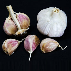 Music Garlic - Heirloom Garlic