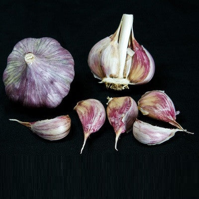 Persian Star Garlic / Samarkand Purple - Heirloom Garlic