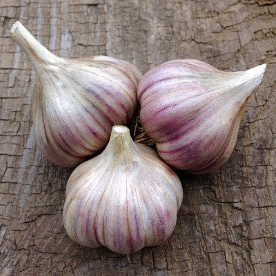 Rose de Lautrec Garlic - Heirloom Garlic